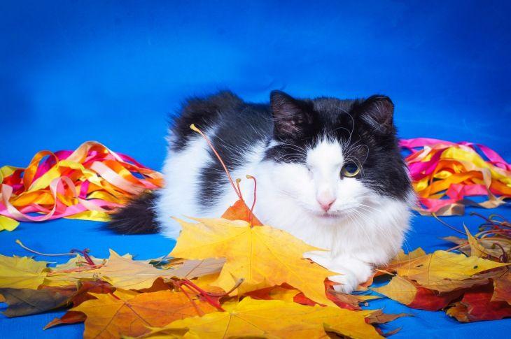 Особенный котик Маркиз ищет любящую семью