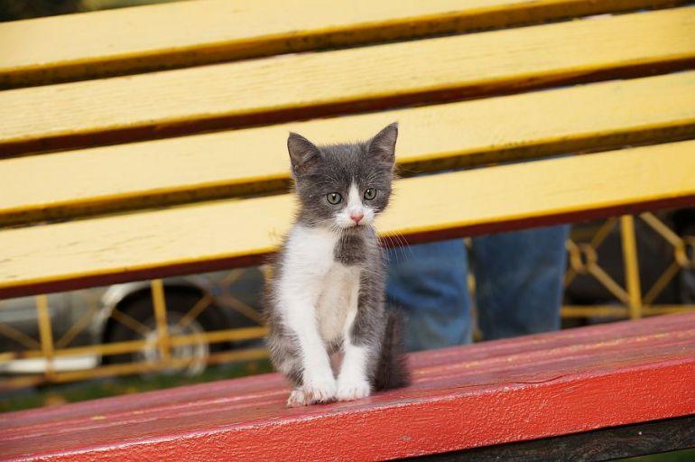Дом для котёнка с лавки
