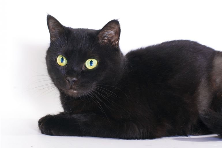 Котенок Муркиса, пасхальная кошка в эбонитовой шубке