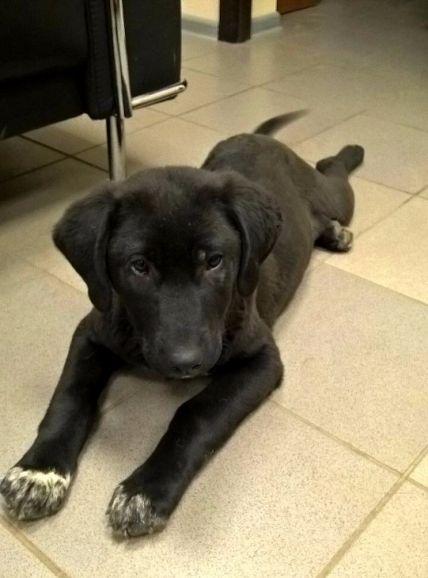 Красивый чёрный щенок в добрые руки