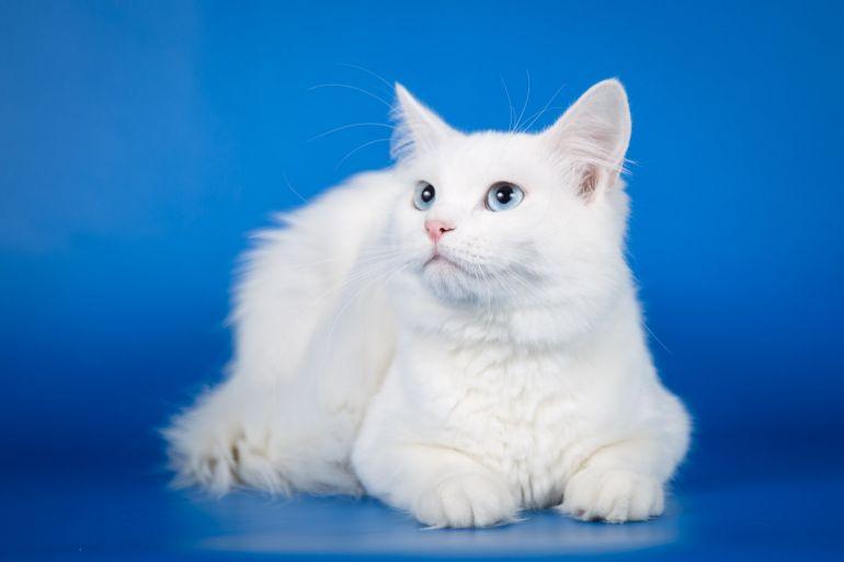 Нежный котик Лотос ищет дом