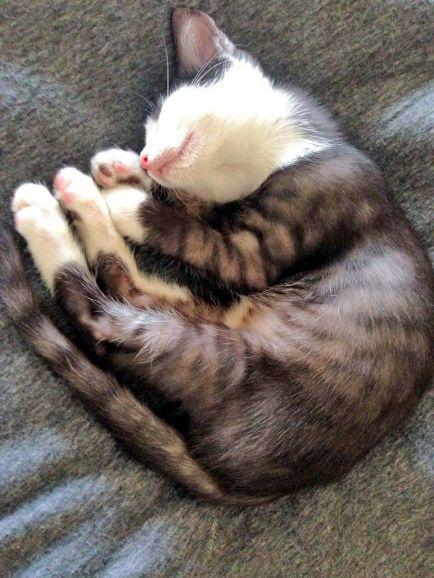 Уникальный по окрасу котёнок Неймур, метис бенгала ищет дом