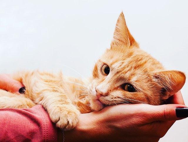 Нежное чудо по имени Гарфилд. Очень красивый рыжий котёнок в поисках дома