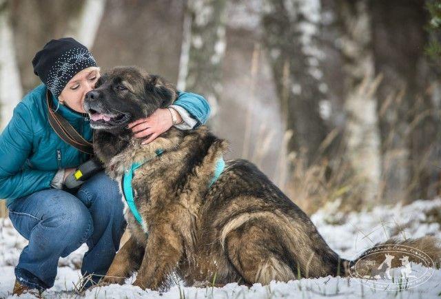 Королева-Бамба. Собака мечты, самая лучшая девочка в поисках дома