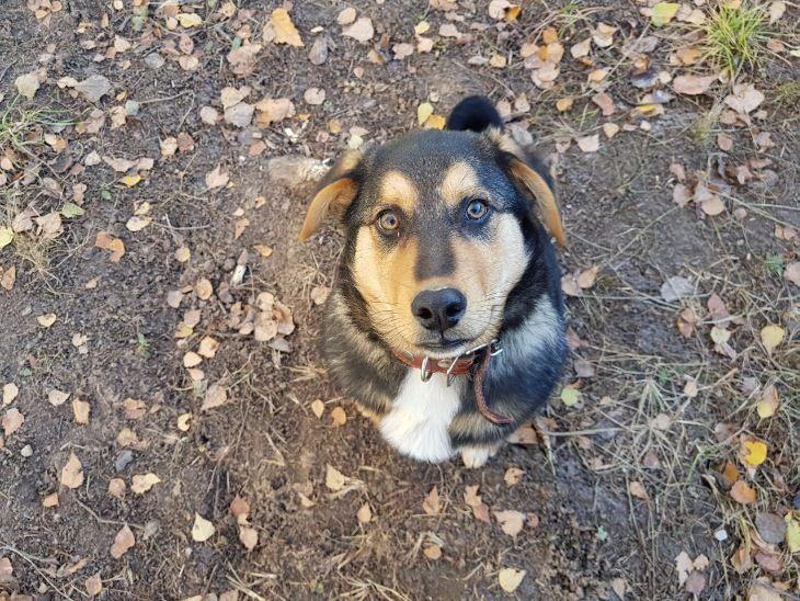 Очаровательный щенок Боря в добрые руки