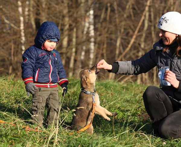 Ласковое чудо по имени Адель, щенок в добрые руки