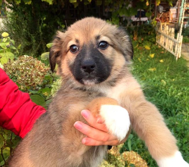 Чудесная малышка Барселона - щенок в добрые руки