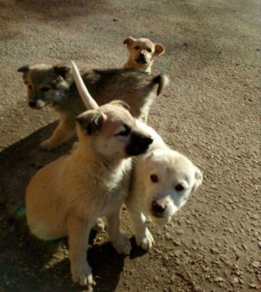 Очаровательные щенки ищут дом