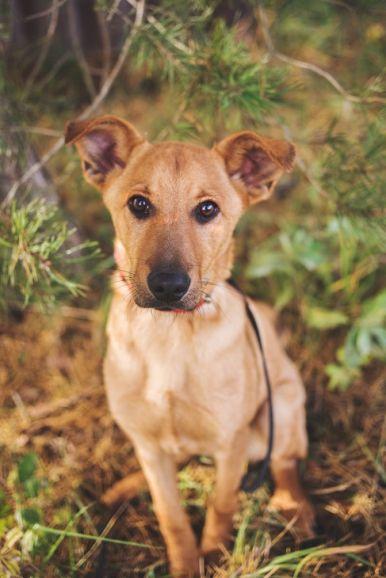 Чудесный щенок Тина в добрые руки