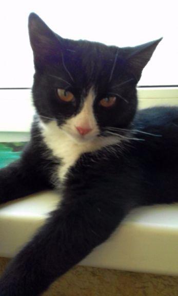 Молодая кошечка Плюша очень хочет домой