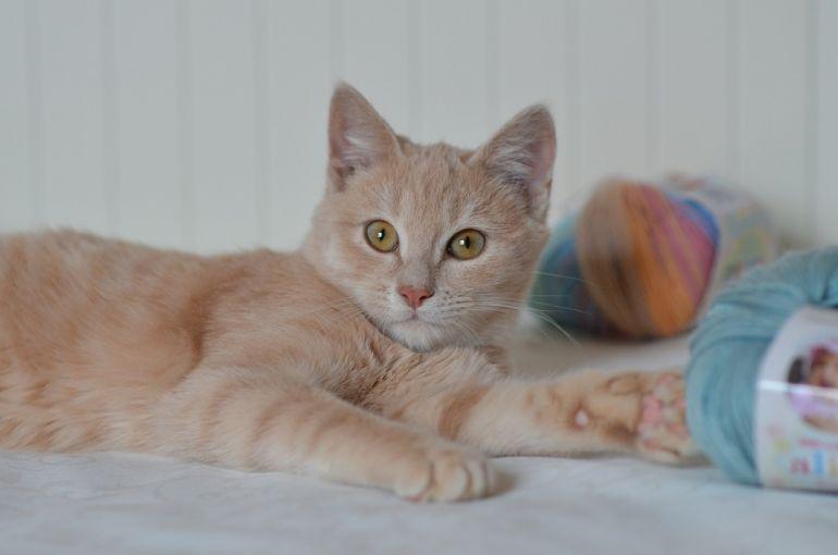 Котёнок Безе в поисках дома