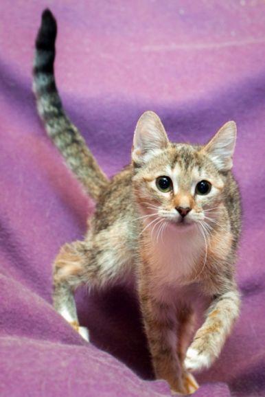 Котенок Сьюзи в добрые руки