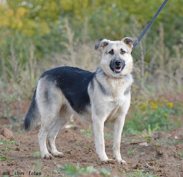 Молодая собака Лайма ищет дом