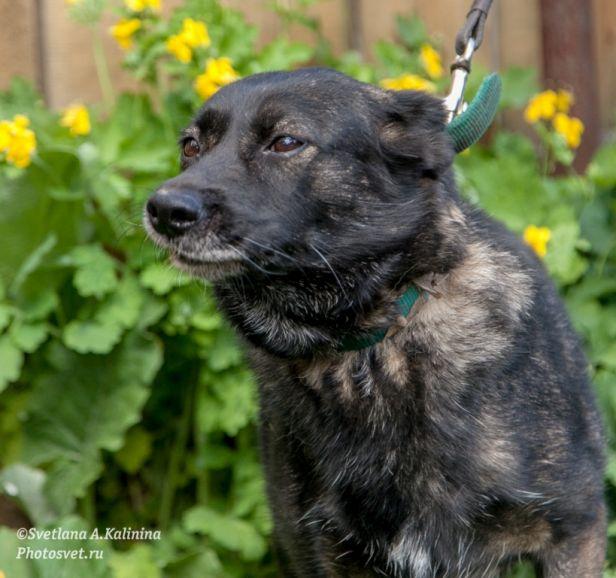 Дина - уникальная собака в дар