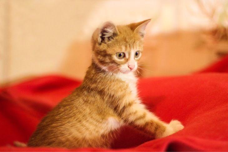 Солнечный милый котёнок Пупсик