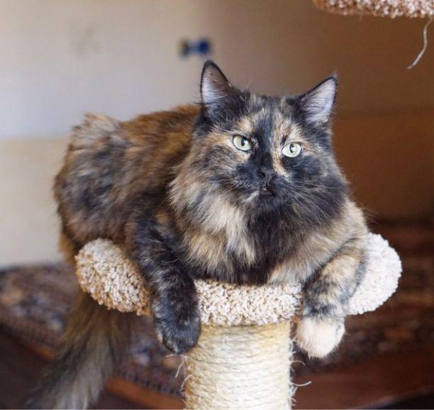 Кошечка-царевна ищет свиту