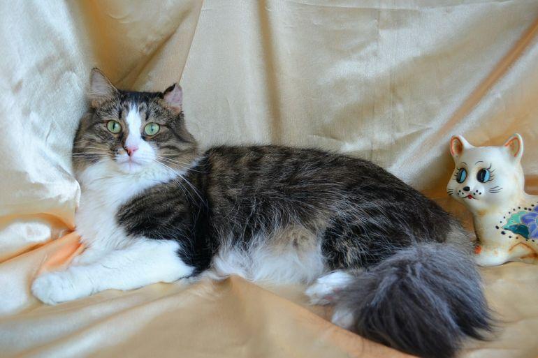 Обаятельный очаровательный умный добрый уютный кот Марсель в дар