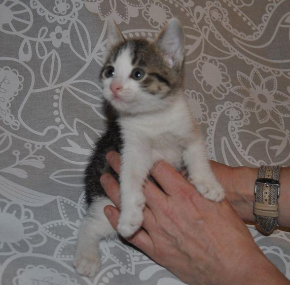 Два чудных котёнка в добрые руки