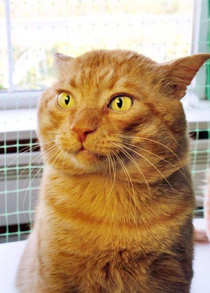 Удивительный котик Робин в поиске дома