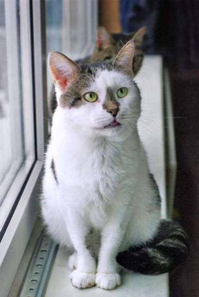 Приютский грустный котик Малыш ищет дом