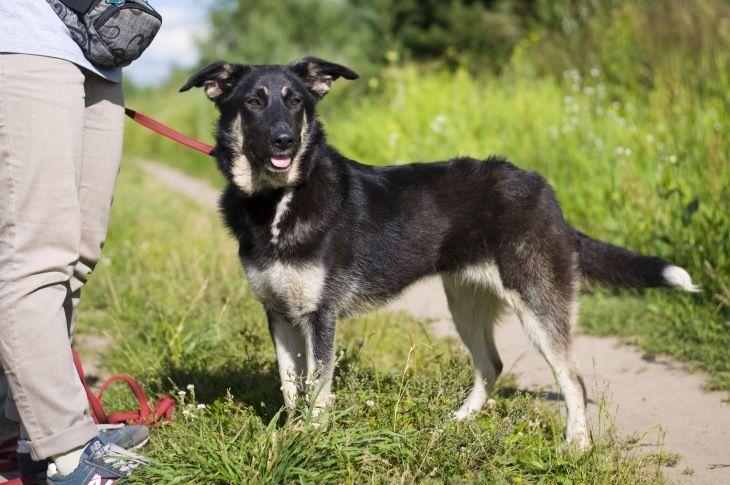 Чудесная собака Лада в добрые руки