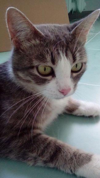Кошка Люси ищет свой дом