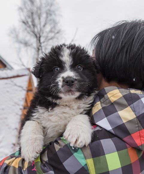 Шикарный щенок Филипп - ищет семью