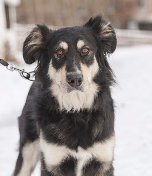 Красивый пёс Балу ищет дом