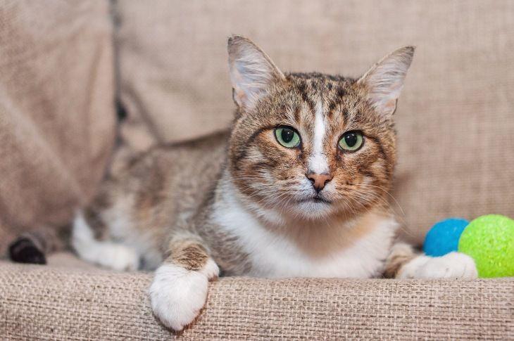 Красивый котик Сильвер в добрые руки