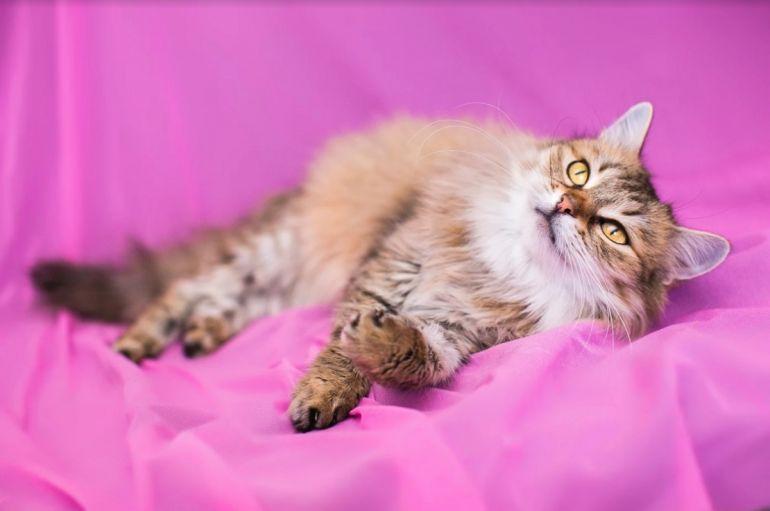 Миниатюрная кошечка Василина в добрые руки