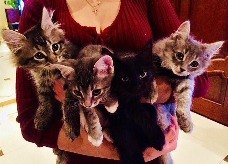 Четверо очаровательных котят в добрые руки, в дар
