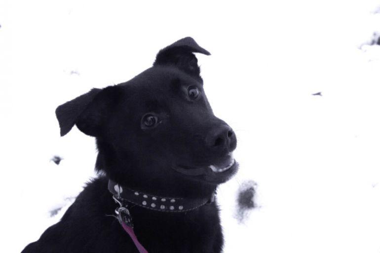 Ищет хозяев невероятный чёрный щенок Джек