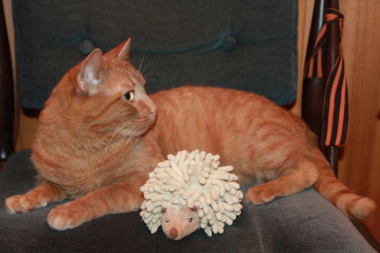 Молоденький рыжий полосатый котик, в дар