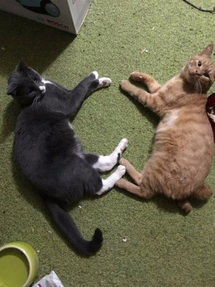Особенный котик Лев разыскивает самые ответственные руки
