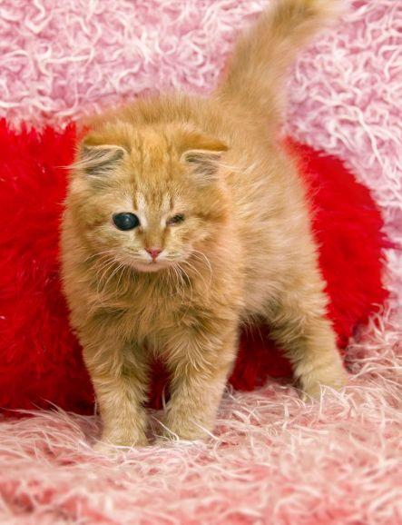Котёнок живущий в темноте, Самсон ищет доброе сердце