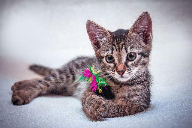 Невероятно милые котята ищут дом и любящих родителей