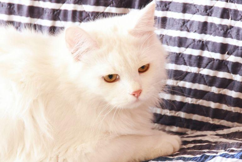 Отличный кот Снежок ждет хороших хозяев