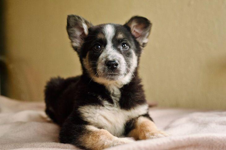 Семь замечательных щенков ищут дом
