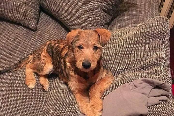 Потрясающий щенок Кевин ищет дом