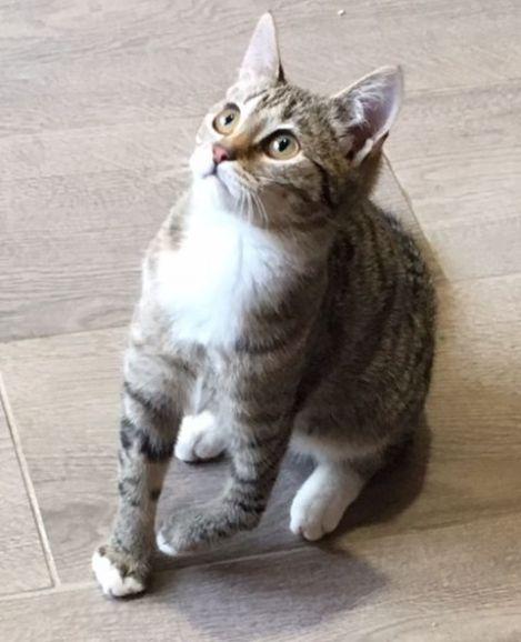 Нежная девочка Алиса. Особенный котёнок, для особенных людей