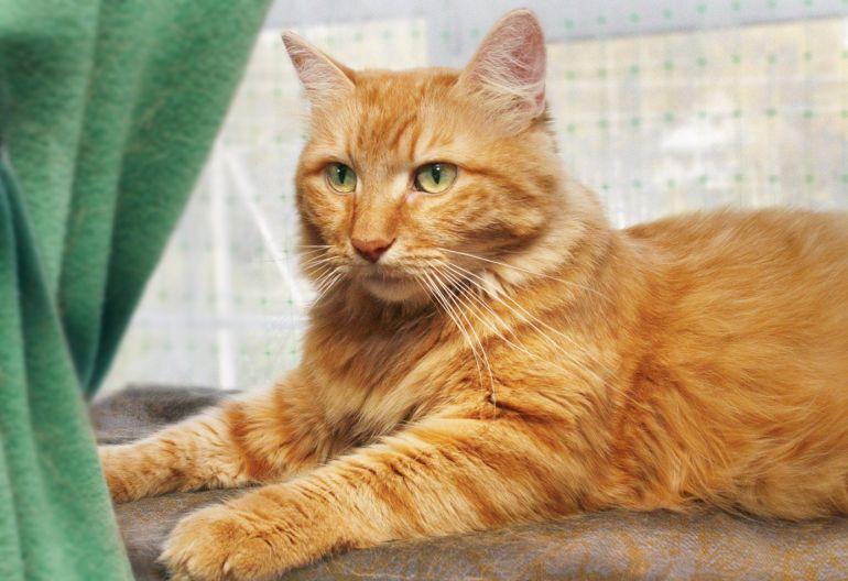 Яркая личность кот Мустафа ищет дом