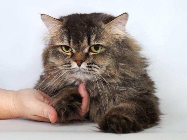 Котик-умничка, котик - доброе сердце, по имени Пушистик Пух