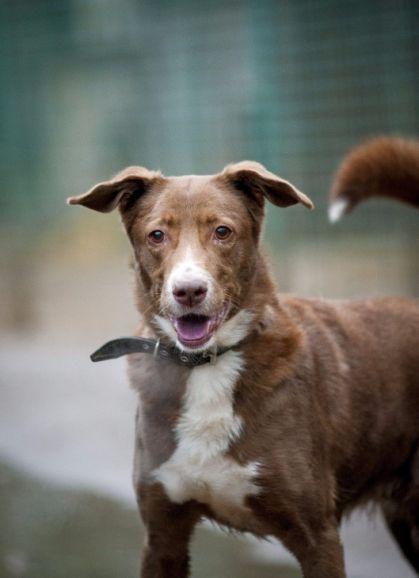 Собака Дина ищет семью