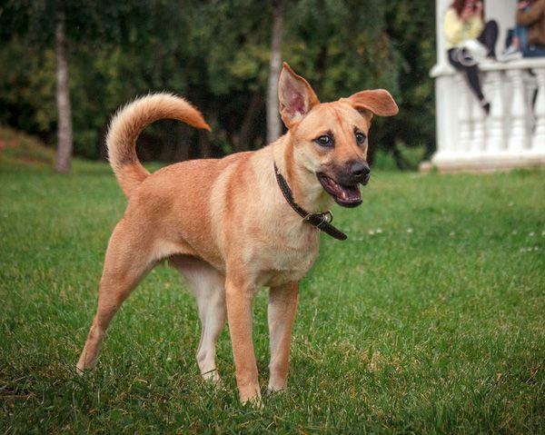Весёлый ребёнок по имени Рада, уникальная собака ищет семью
