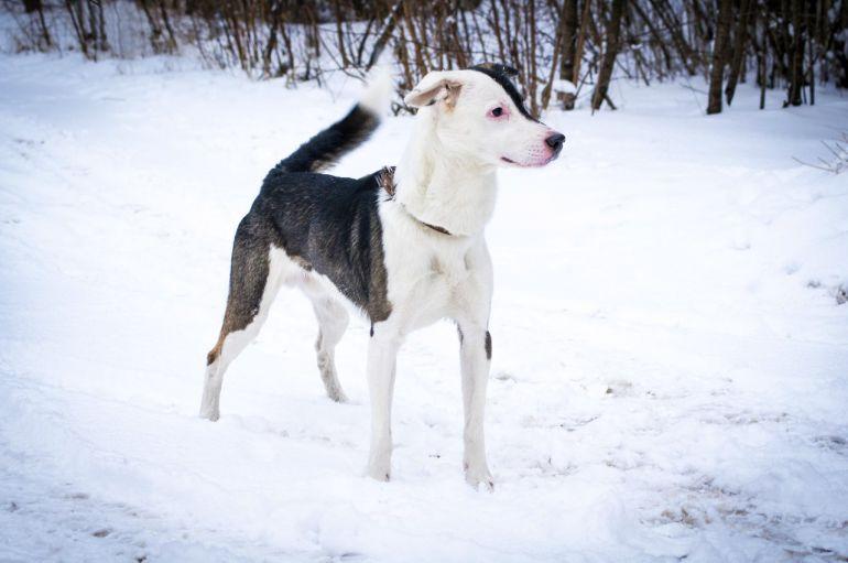 Пёс Василий потерял маму. Ищем хозяев