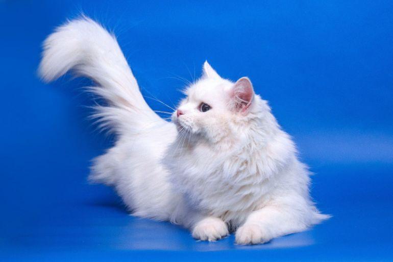 Красивый и ласковый молодой котик - Лотос