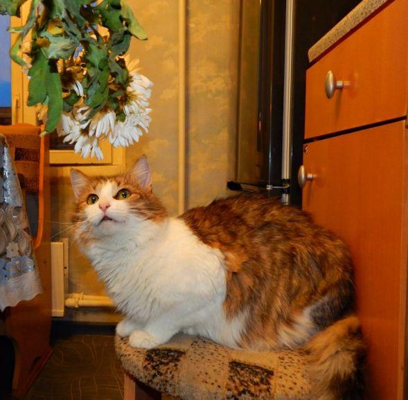 Молоденькая кошечка Лася ищет дом
