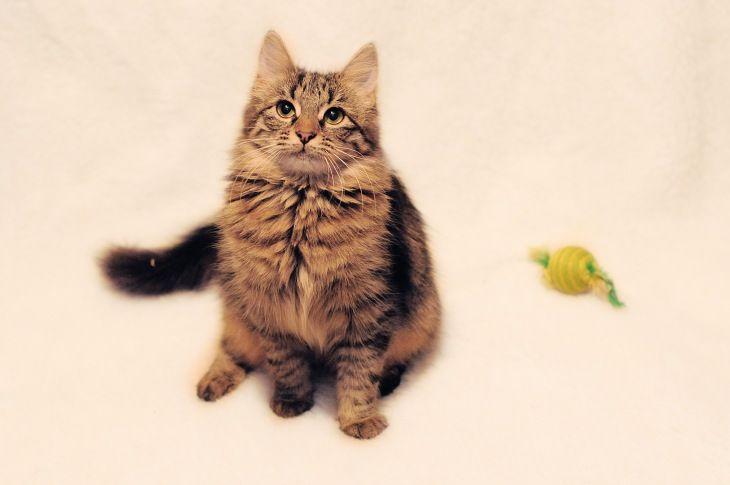 Котенок Сонечка ищет дом