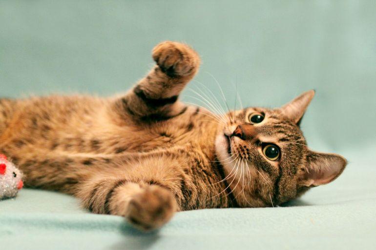 Молодой котик-полосатик (10 месяцев) в дар