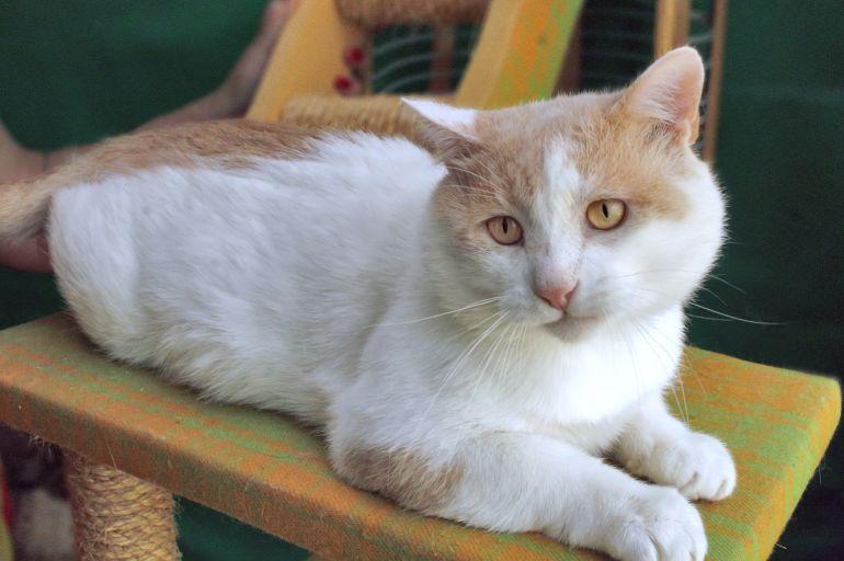 Кот Ричард - благородное сердце ищет дом